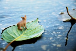 'Floating away — Peace Pig 260' by https://www.flickr.com/photos/sidonath/